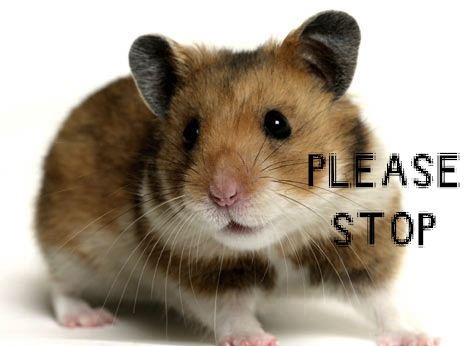 http://www.questionsleep.com/mindspill/wp-content/uploads/2010/03/hamster.jpg