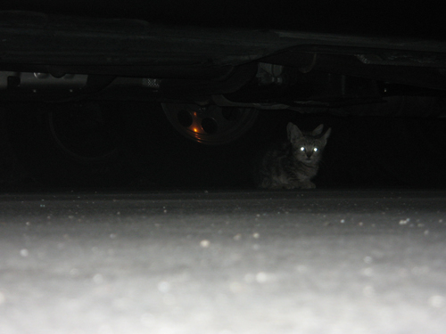 My camera died, so no pictures of the koalas, but this picture of some cats under a car was on my memory card.